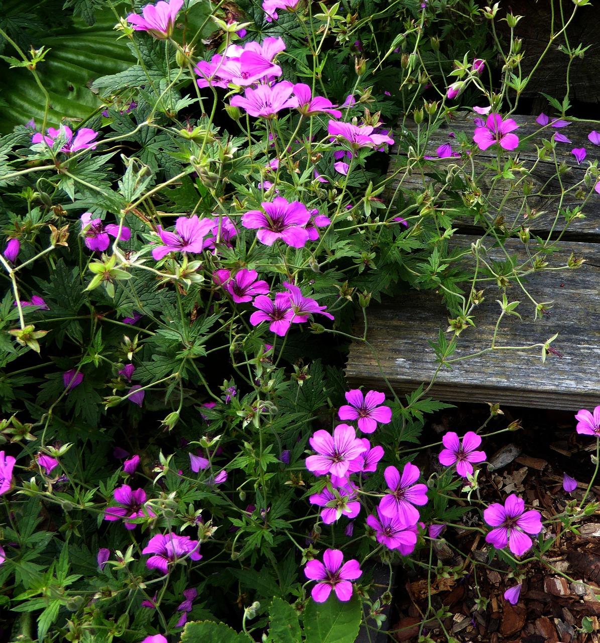 Small Flowerspurplepinknaturegarden Plants Free Photo From