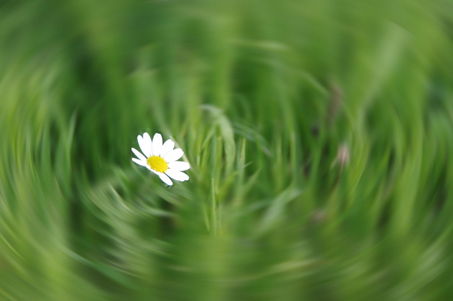Whiteflowerssmallgrassmotionnbspblur free photo from needpix whiteflowerssmallgrassmotionnbspblurmovementdesign mightylinksfo