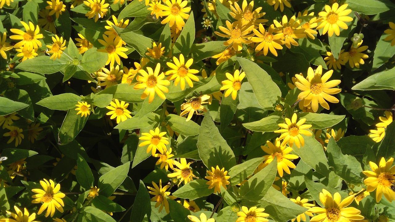 Small Yellow Flowersnaturegardenflowerspring Free Photo From