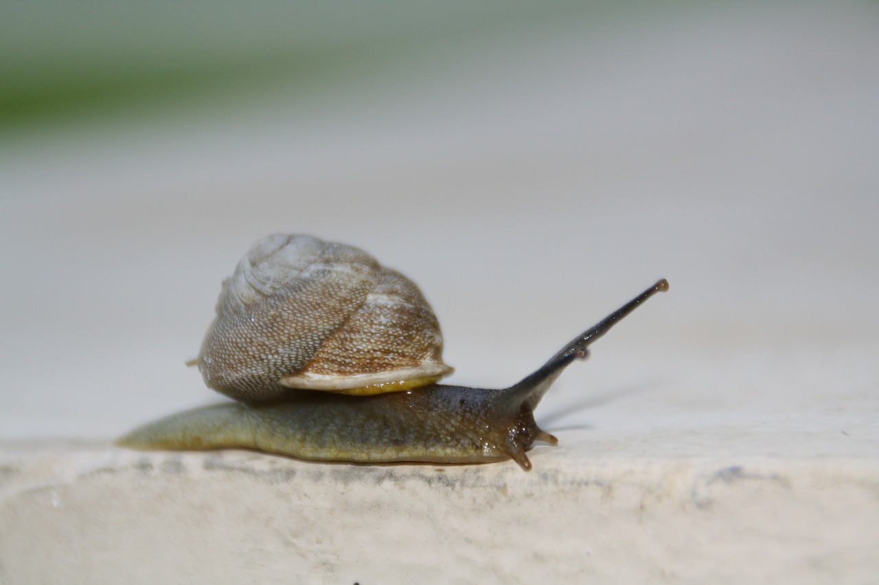 snail slow moving free photo