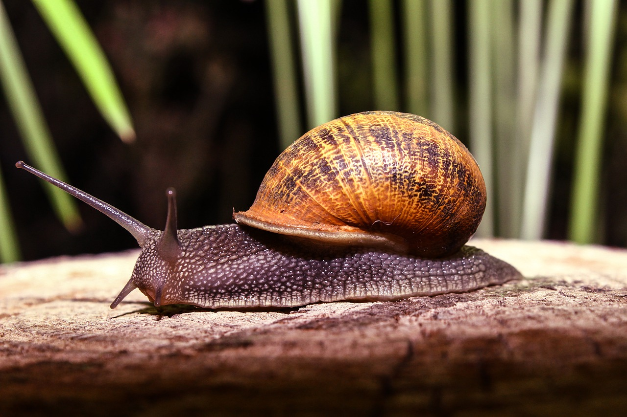 snail animal nature free photo