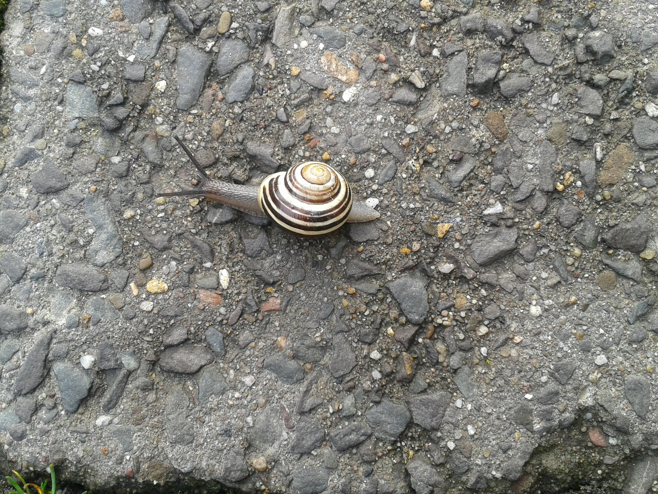 snail slowly sneak free photo