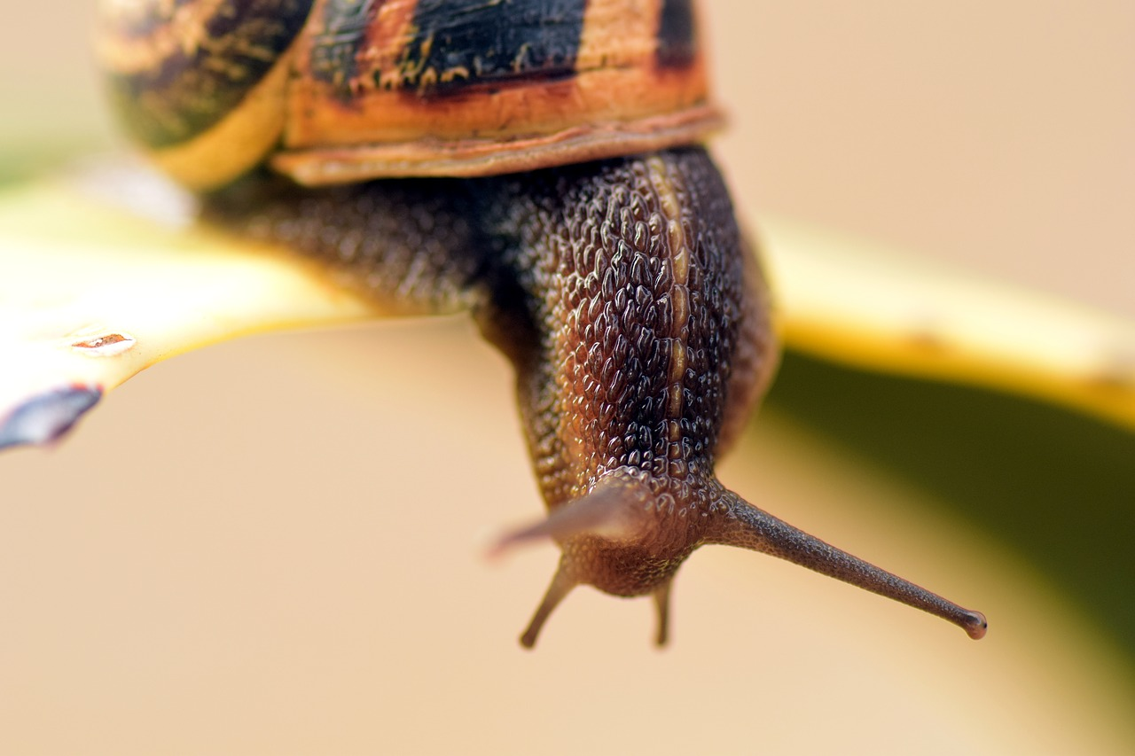 snail shell close free photo