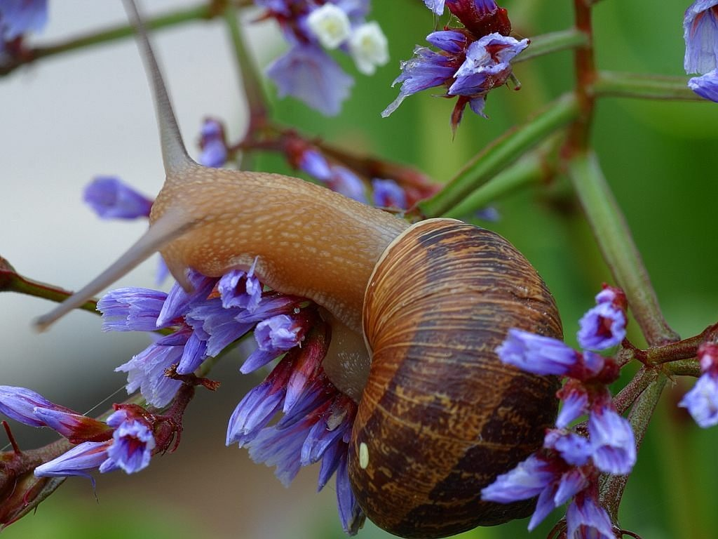 snail shell flower free photo