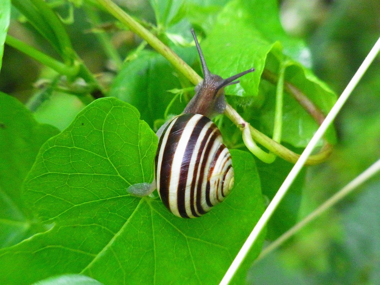 snail invertebrates animal free photo