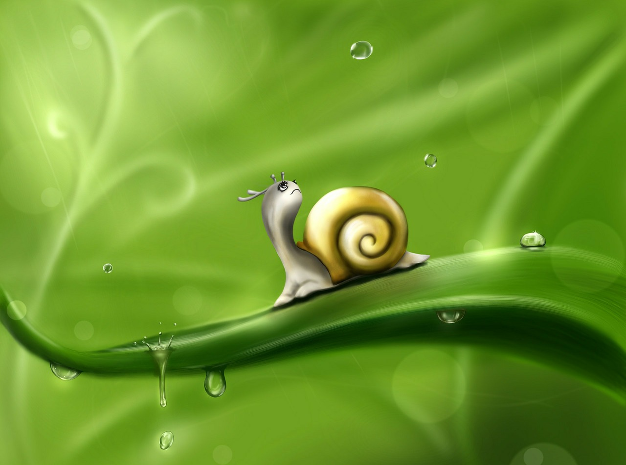 snail drops rain free photo