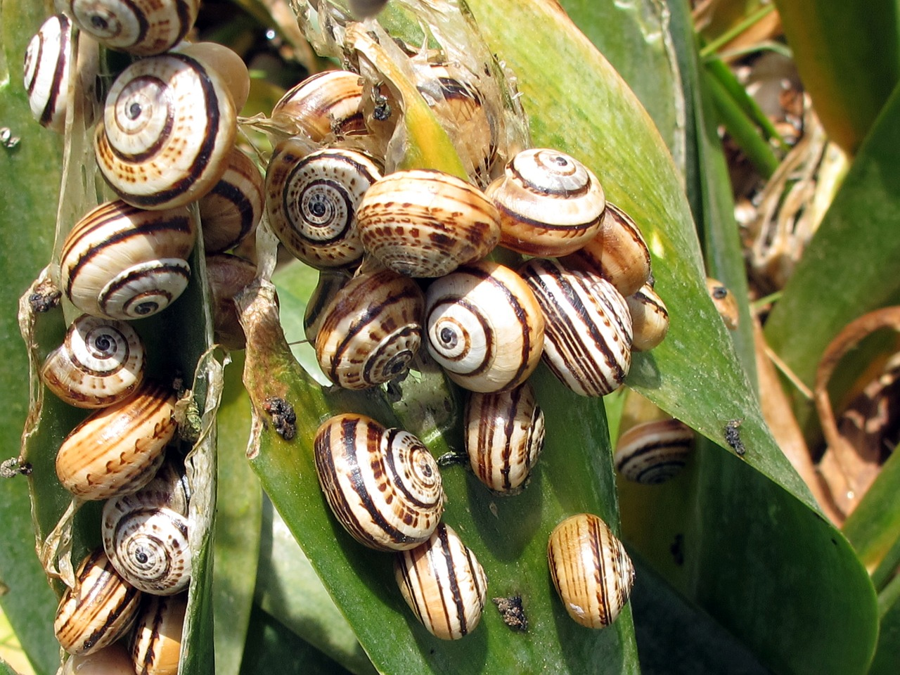 snails turkey botany free photo