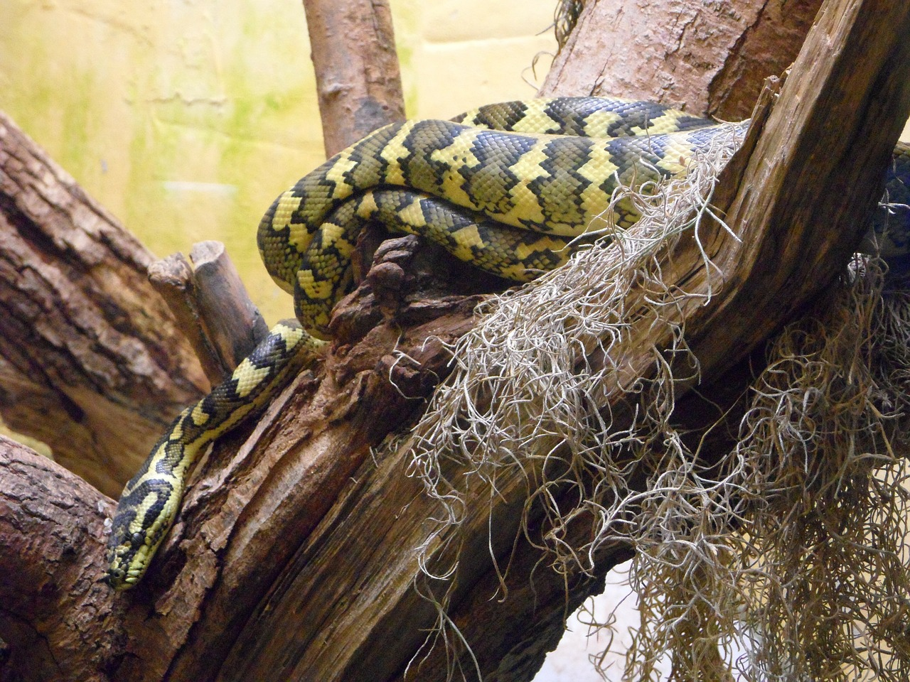 snake terrarium reptile free photo