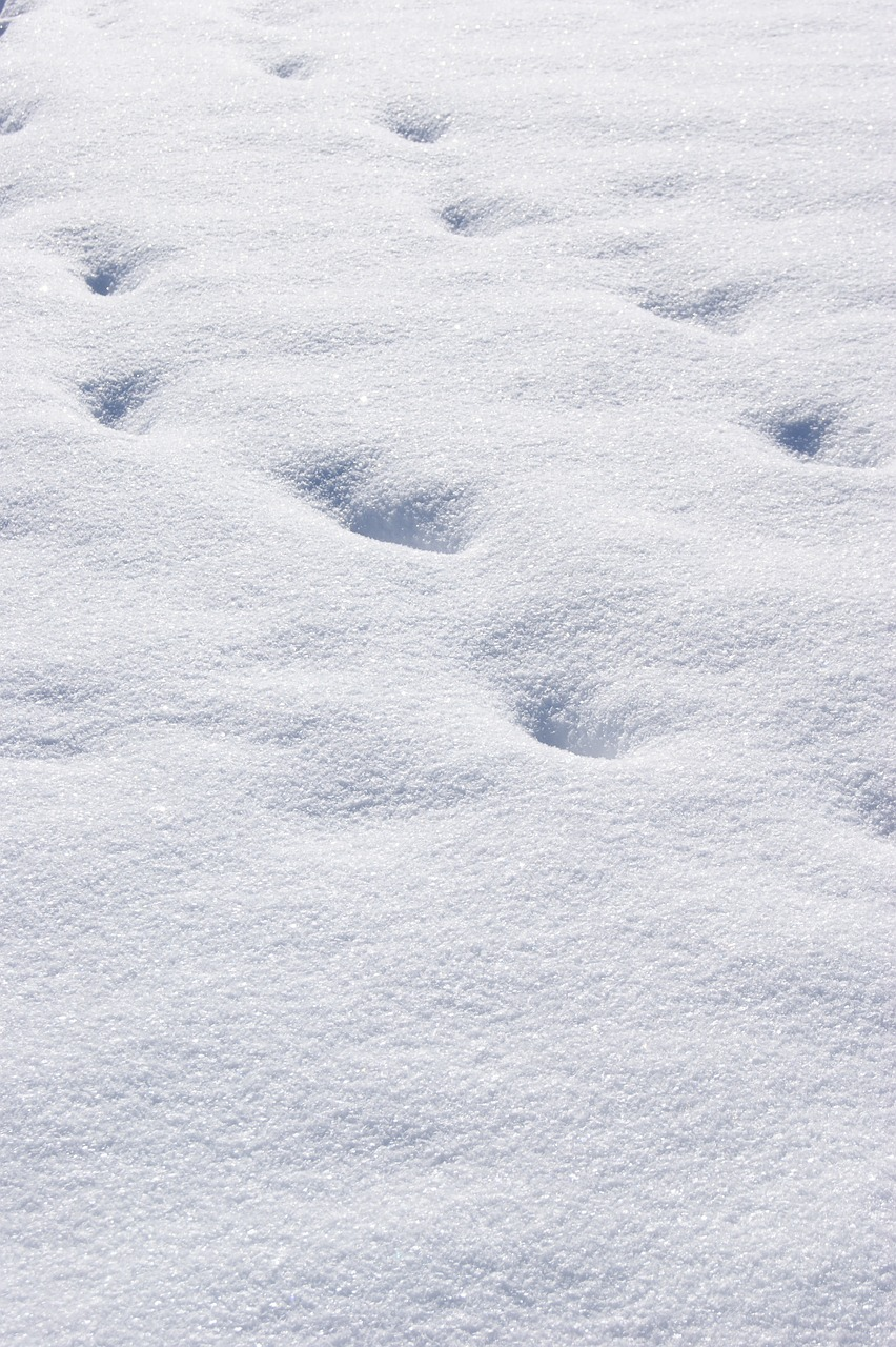 snow,traces,white,footprints,wintry,free pictures, free photos, free images, royalty free, free illustrations, public domain