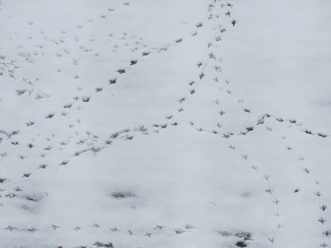 snow traces footprints free photo