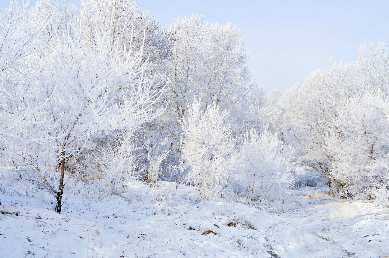 snow frost landscape free photo
