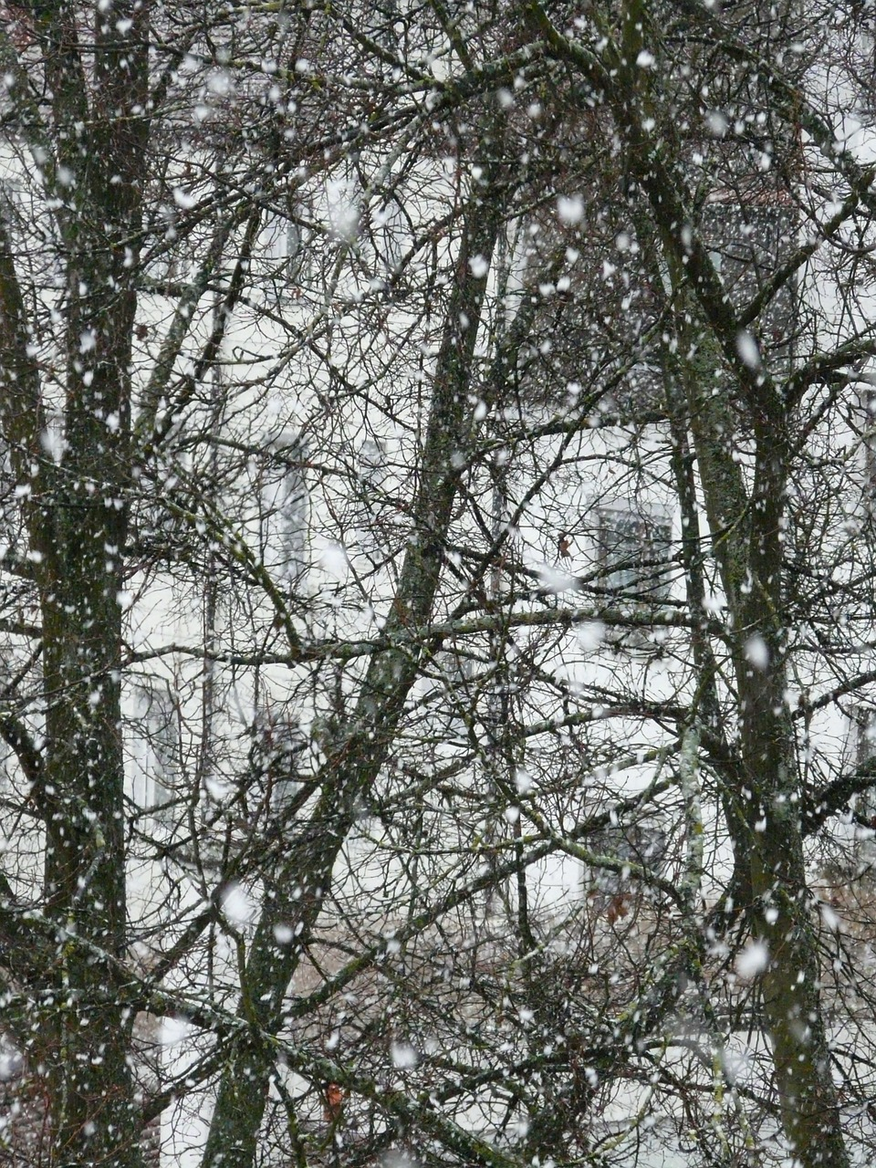 snowfall,snow,snowflakes,blizzard,winter,flake,winter dream,cold,icy,white,snow storms,trees,bad,overview,free pictures, free photos, free images, royalty free, free illustrations, public domain
