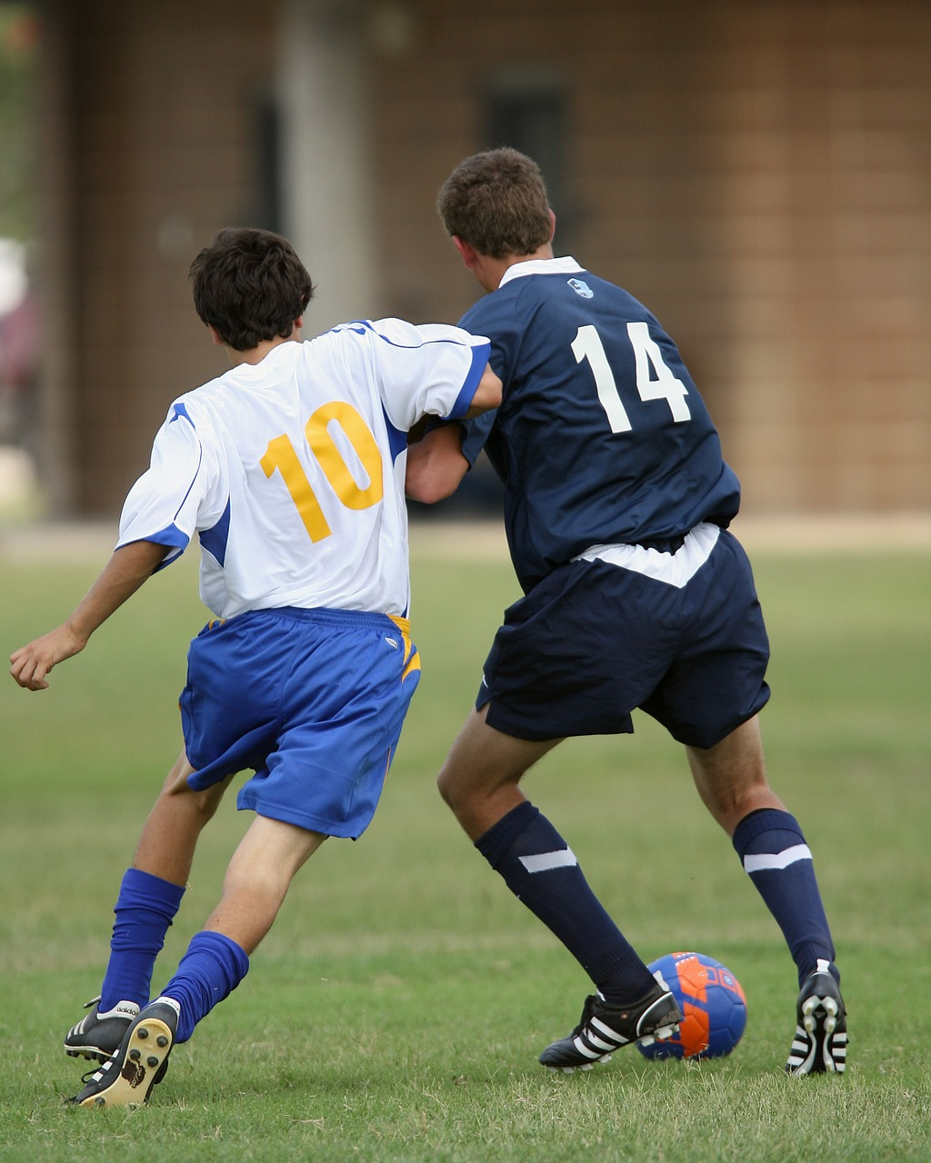 soccer football soccer players free photo