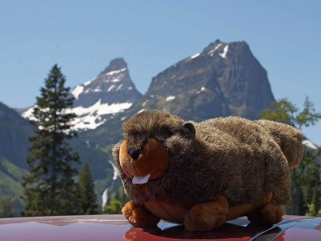 soft toy marmot mountains free photo