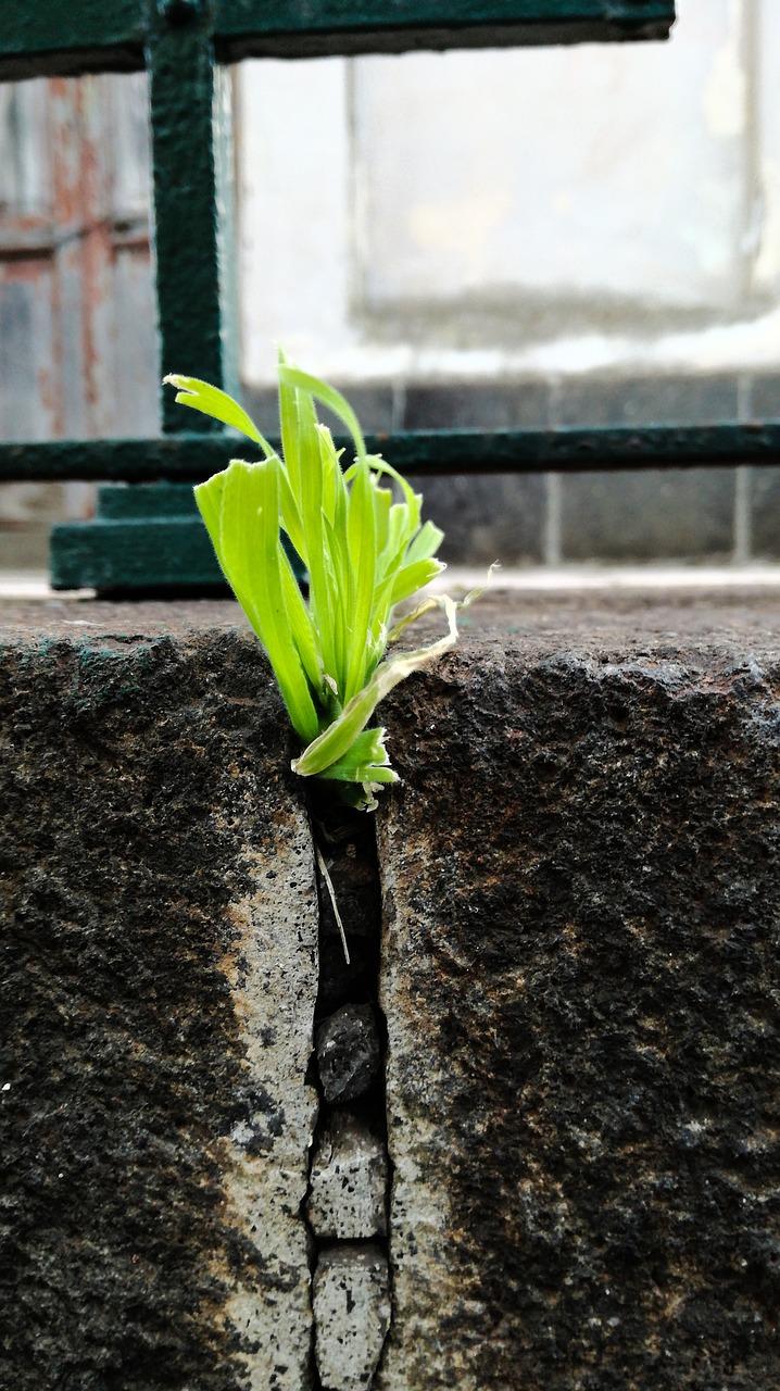 Soilplantleafontogenynature Free Photo From Needpix