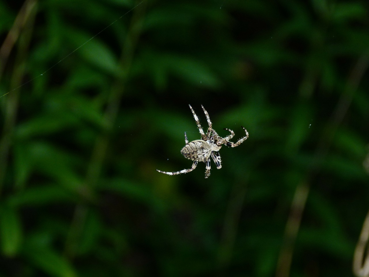 spider thr with free photo
