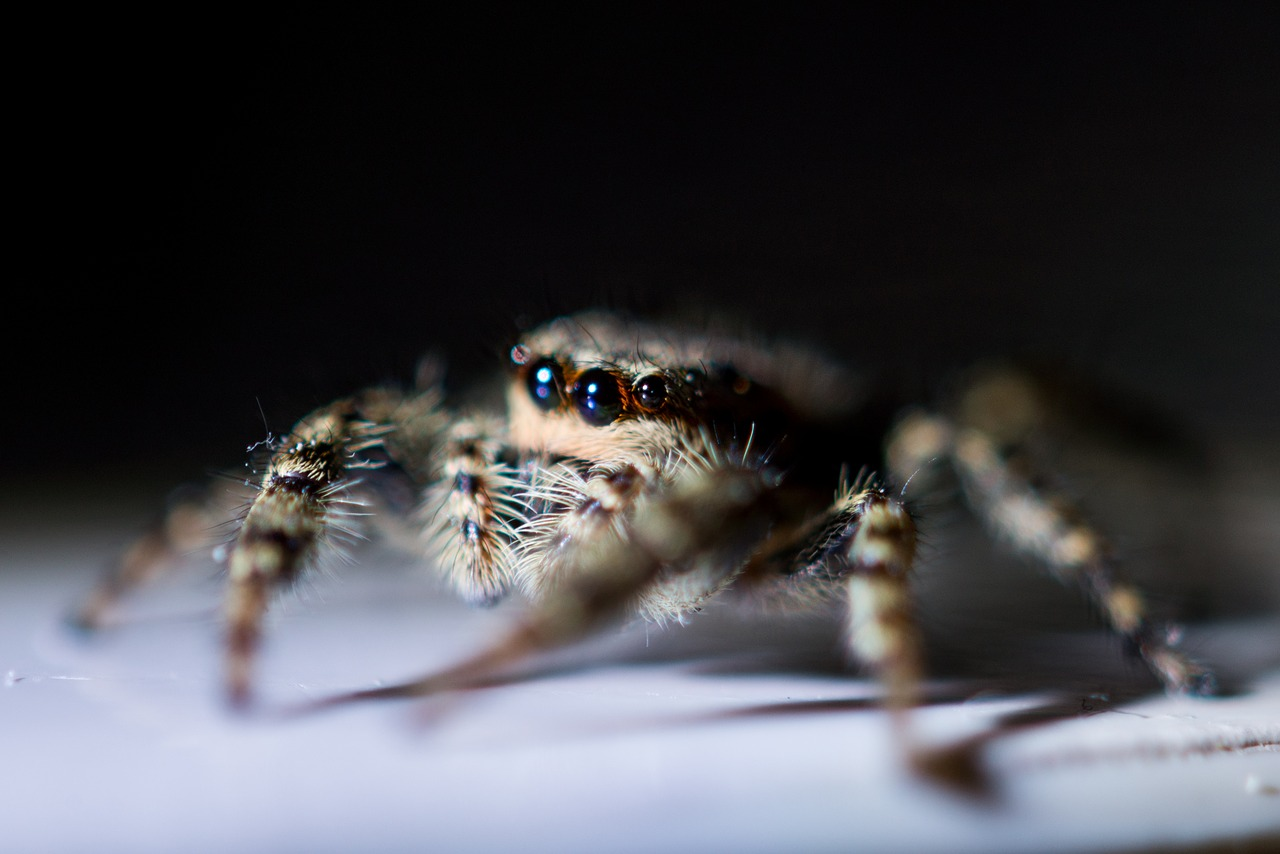 Spider, macro, animal, nature, cobweb - free image from needpix.com