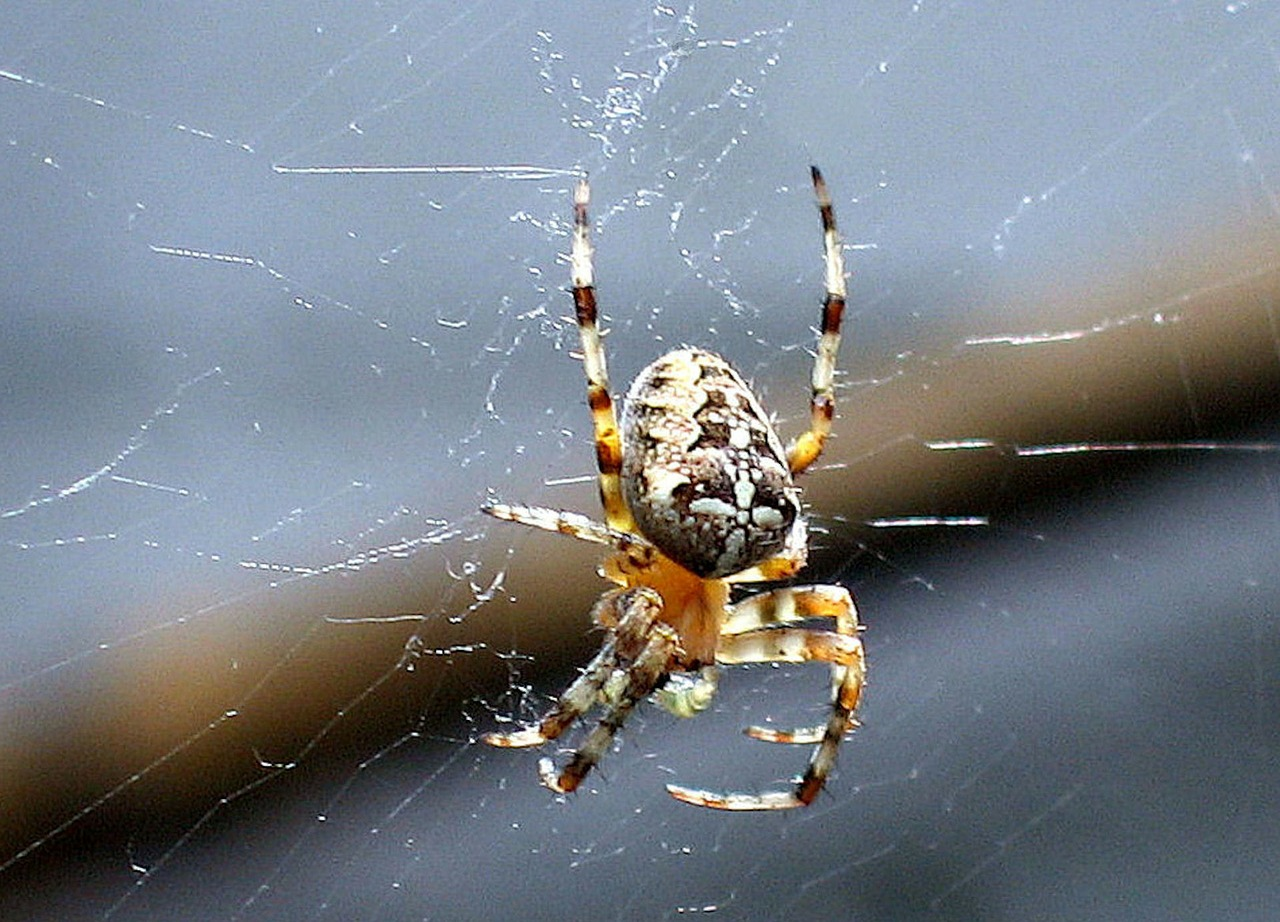 spin web spiders free photo