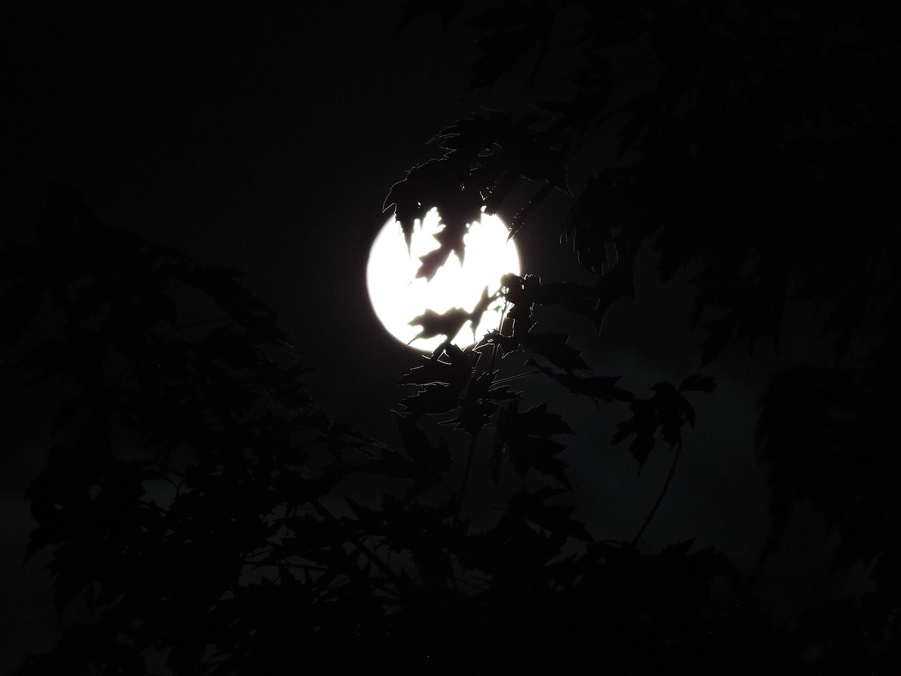spooky moonlight through trees halloween free photo