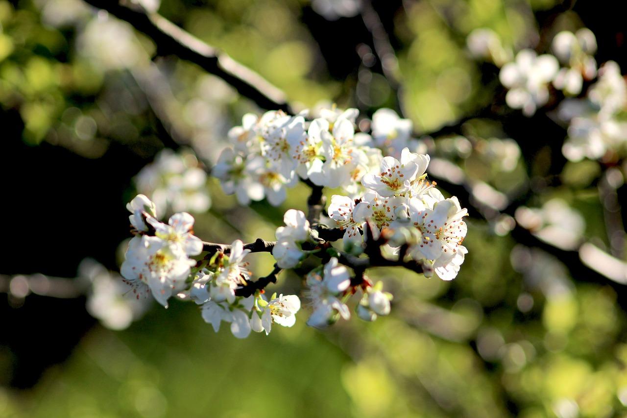 Springflowersnatureridebuds Free Photo From Needpix