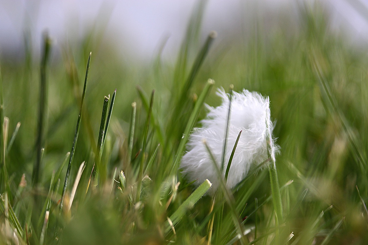 spring grass a feather free photo
