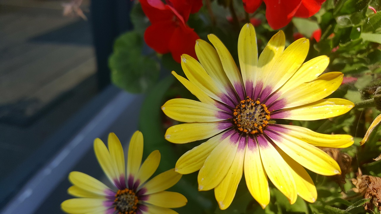 Springflowersthe See Super Maximumfree Pictures Free Photos