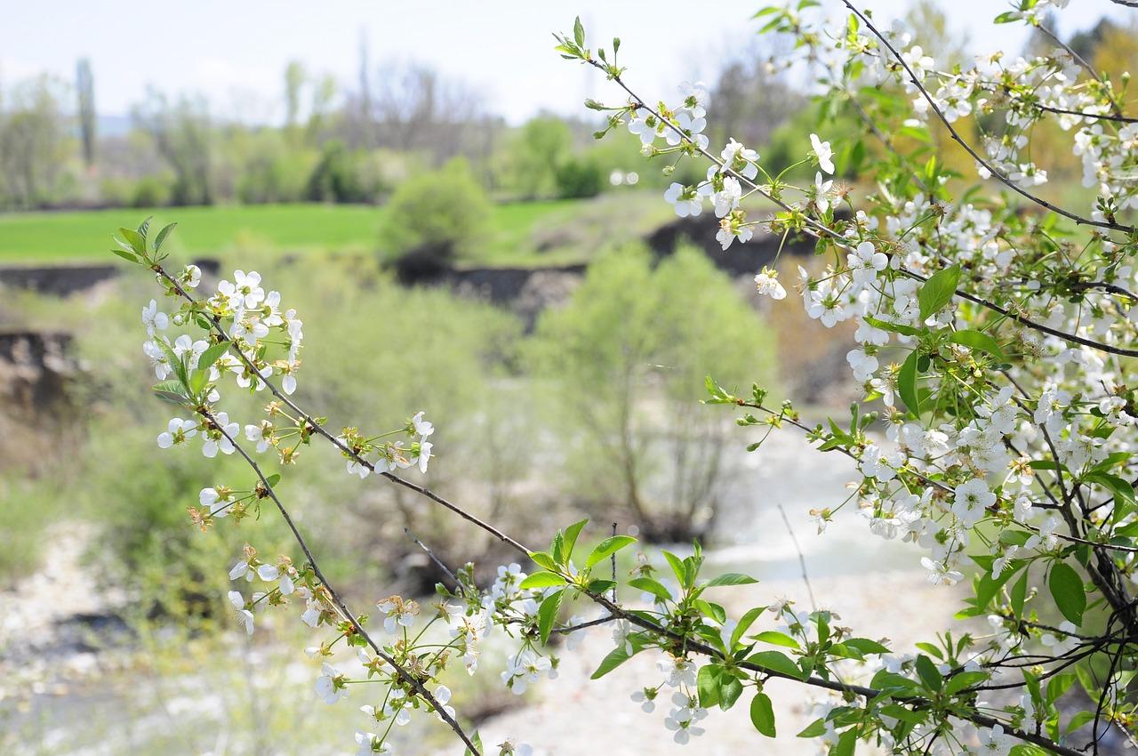 Springflowernetworkchichewa Picturesofficial Spring Free Photo