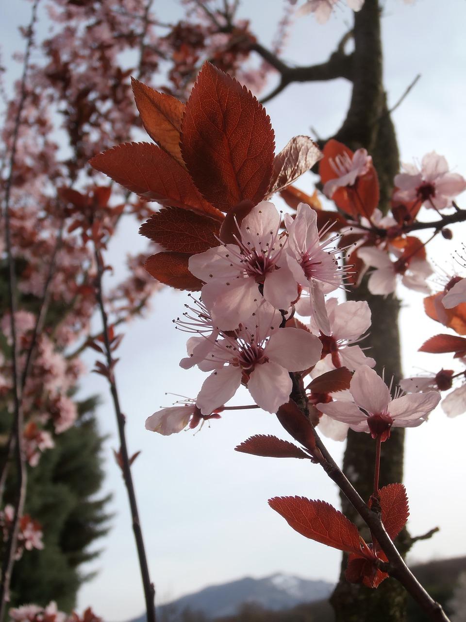 Springnatureflowerspring Flowersfree Pictures Free Photo From