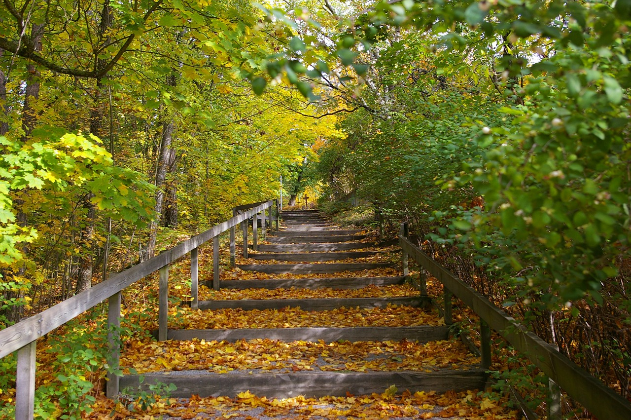 staircase,nature,autumn,forest,free pictures, free photos, free images, royalty free, free illustrations, public domain
