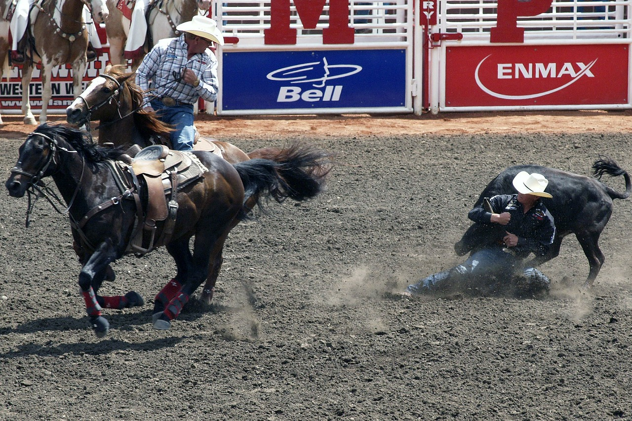 stampede clagary canada free photo