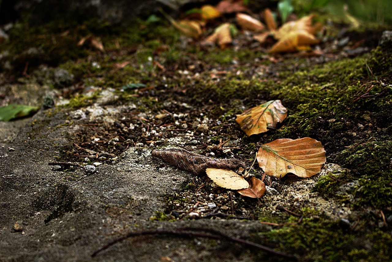 leaves autumn forest free photo