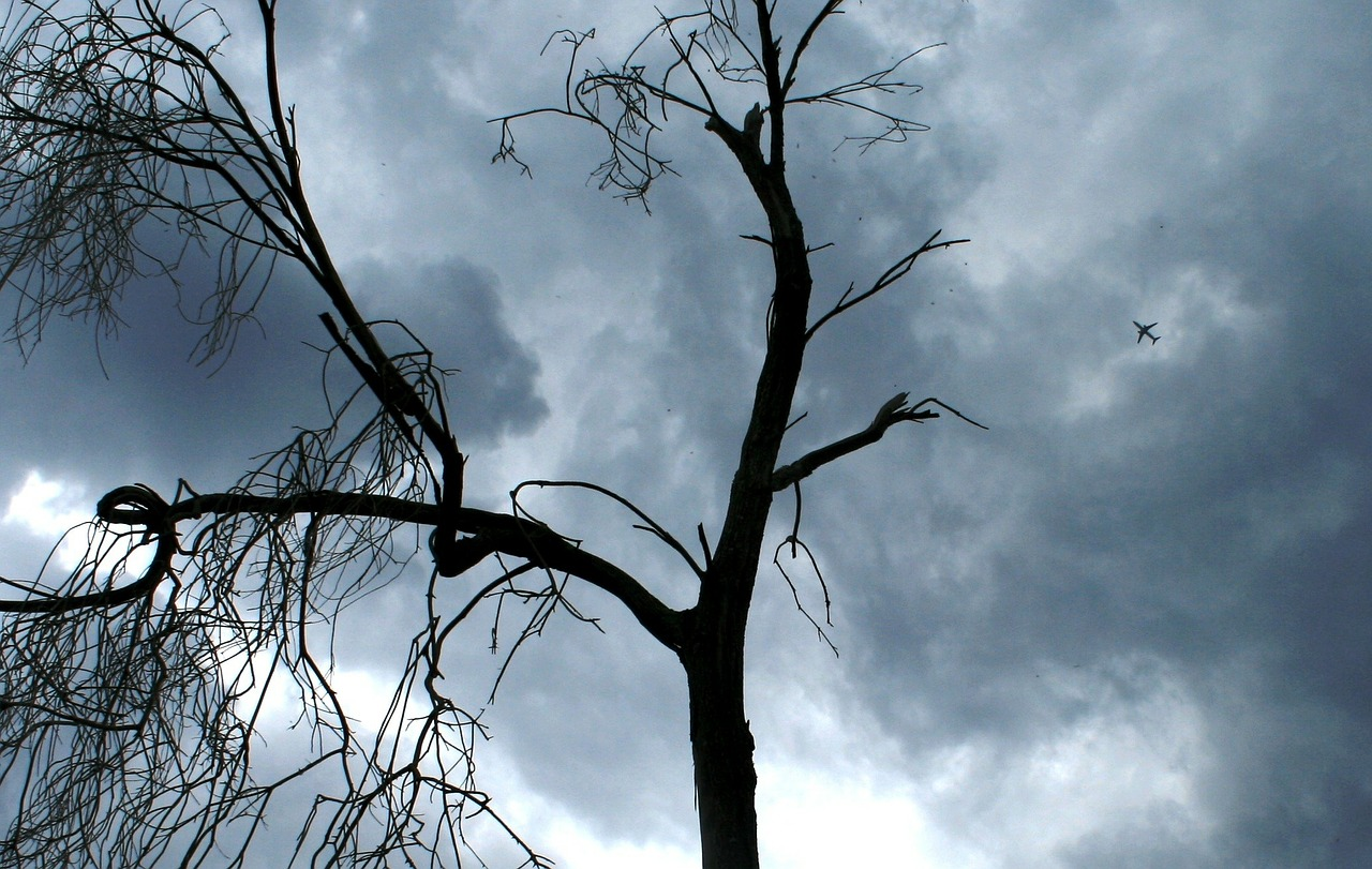 stormy sky clouds gathering dead tree free photo