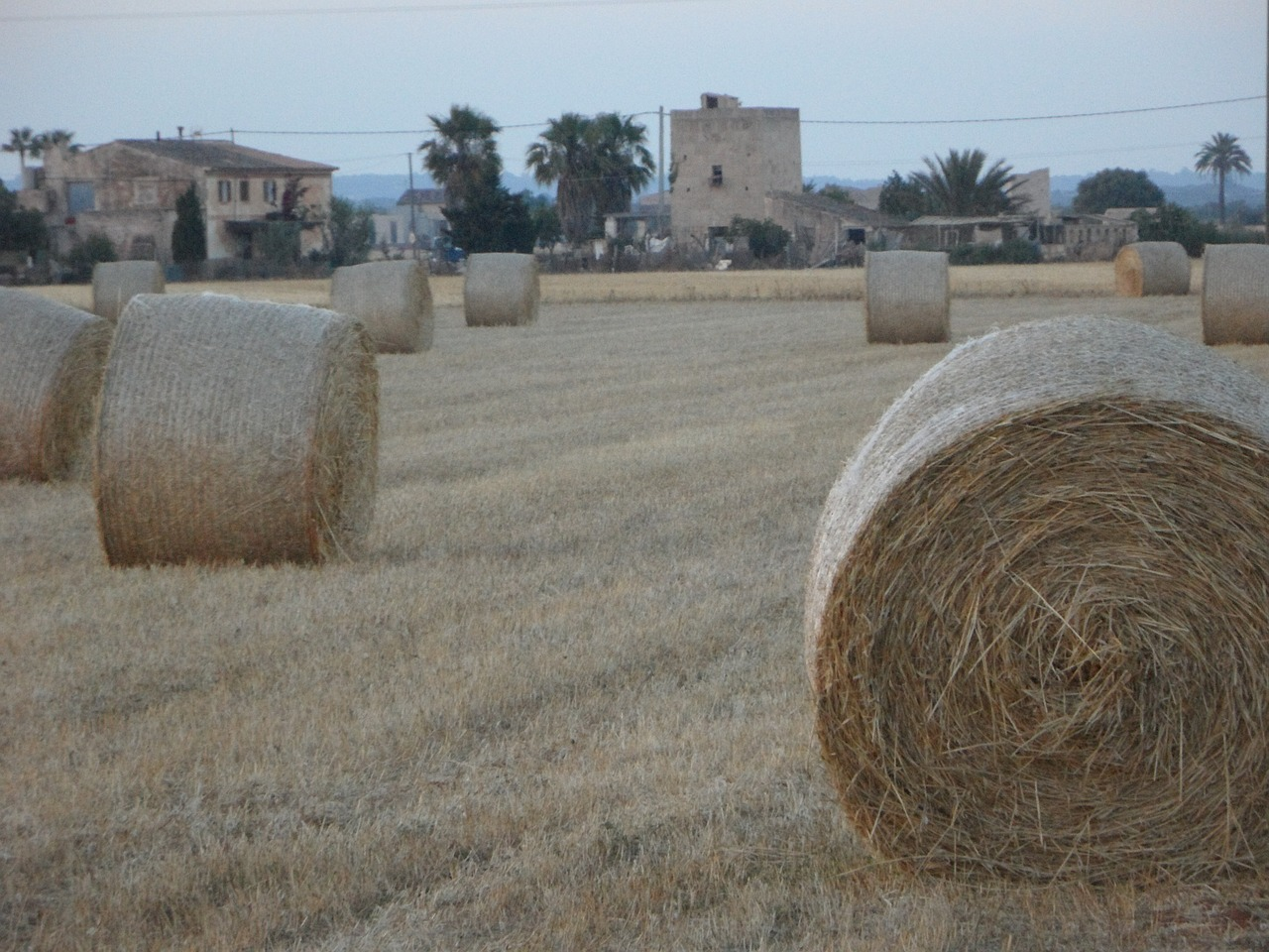 straw bales hay bales field free photo