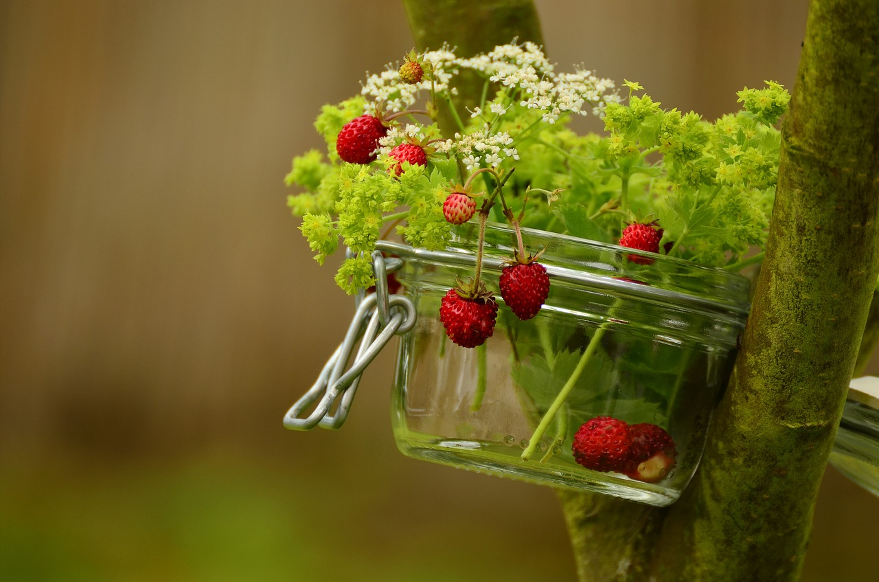 strawberries,wild strawberries,walder berries,frauenmantel,bouquet,glass,fruits,ripe,summer,still life,decoration,jar,of course,garden,free pictures, free photos, free images, royalty free, free illustrations, public domain