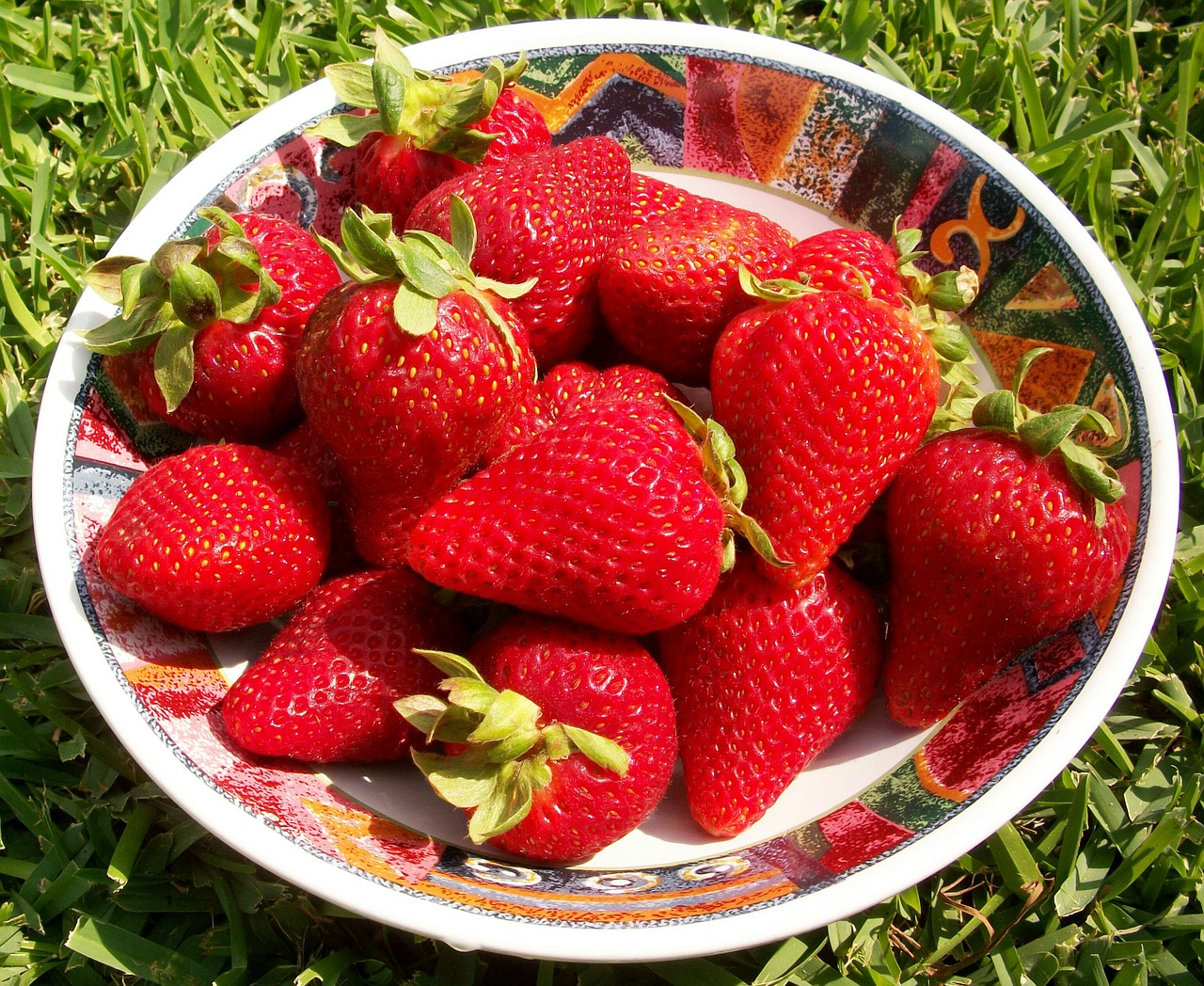 strawberries berries season free photo