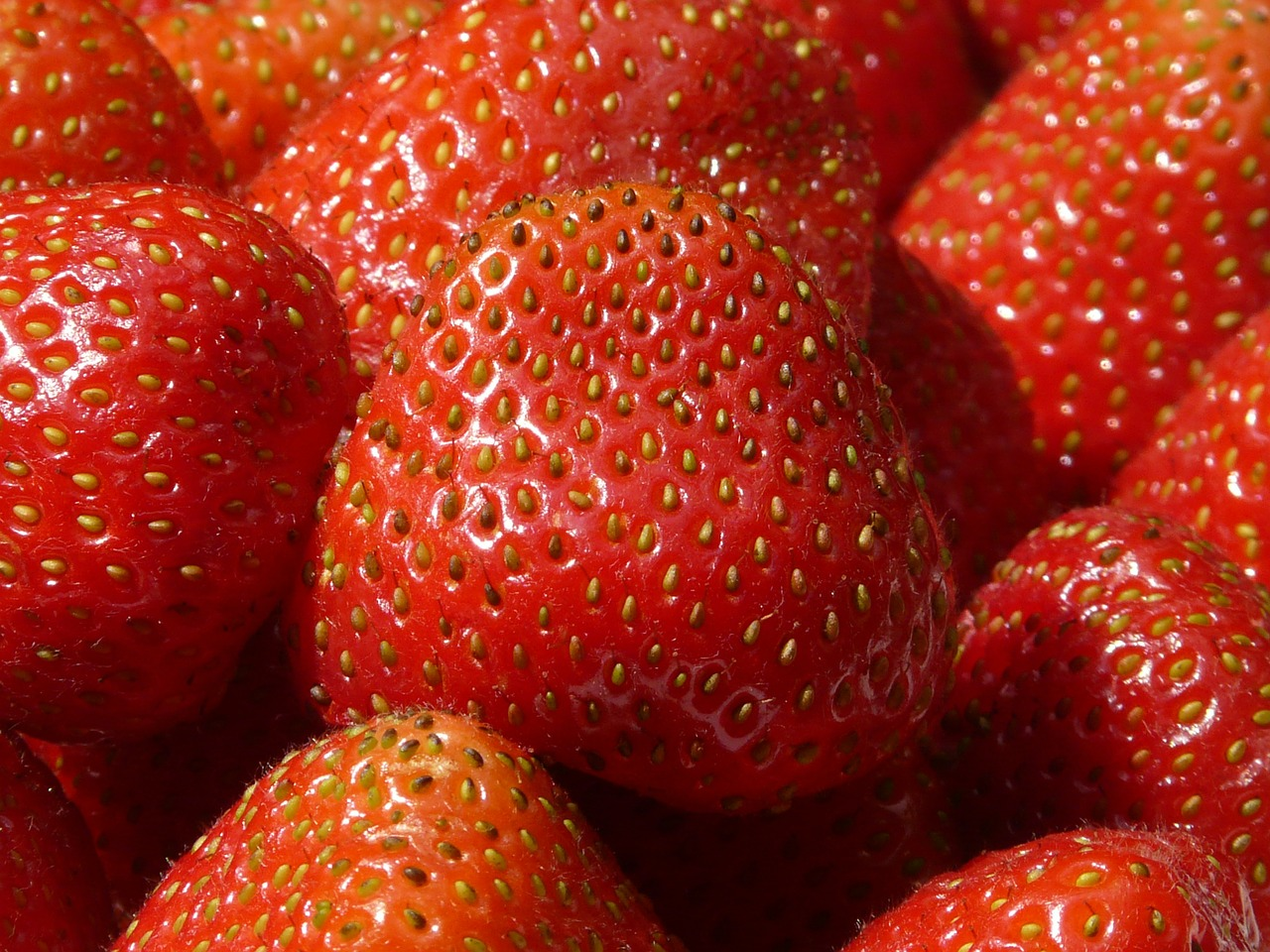strawberries fruity red free photo