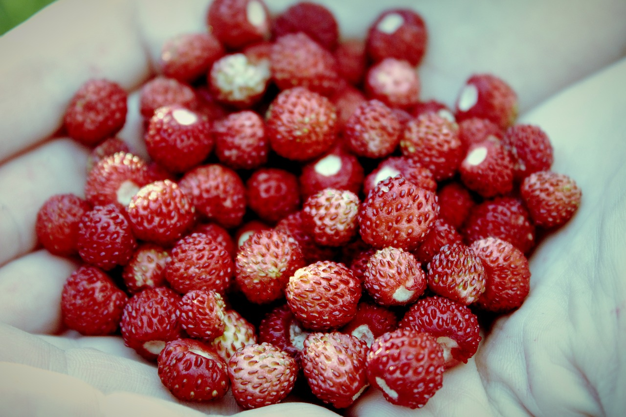 strawberries wild strawberries red free photo