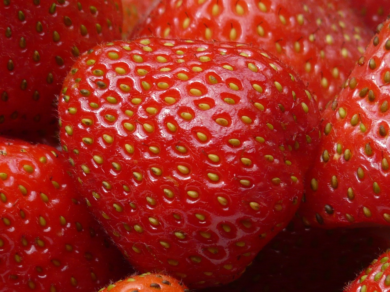 strawberry fruit sweet free photo