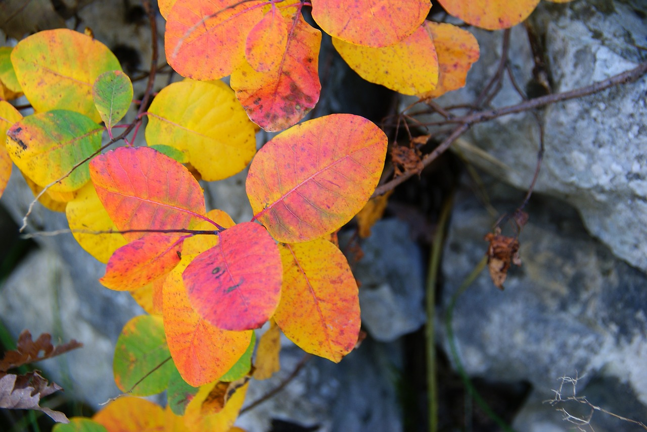 sumac forest leaves free photo
