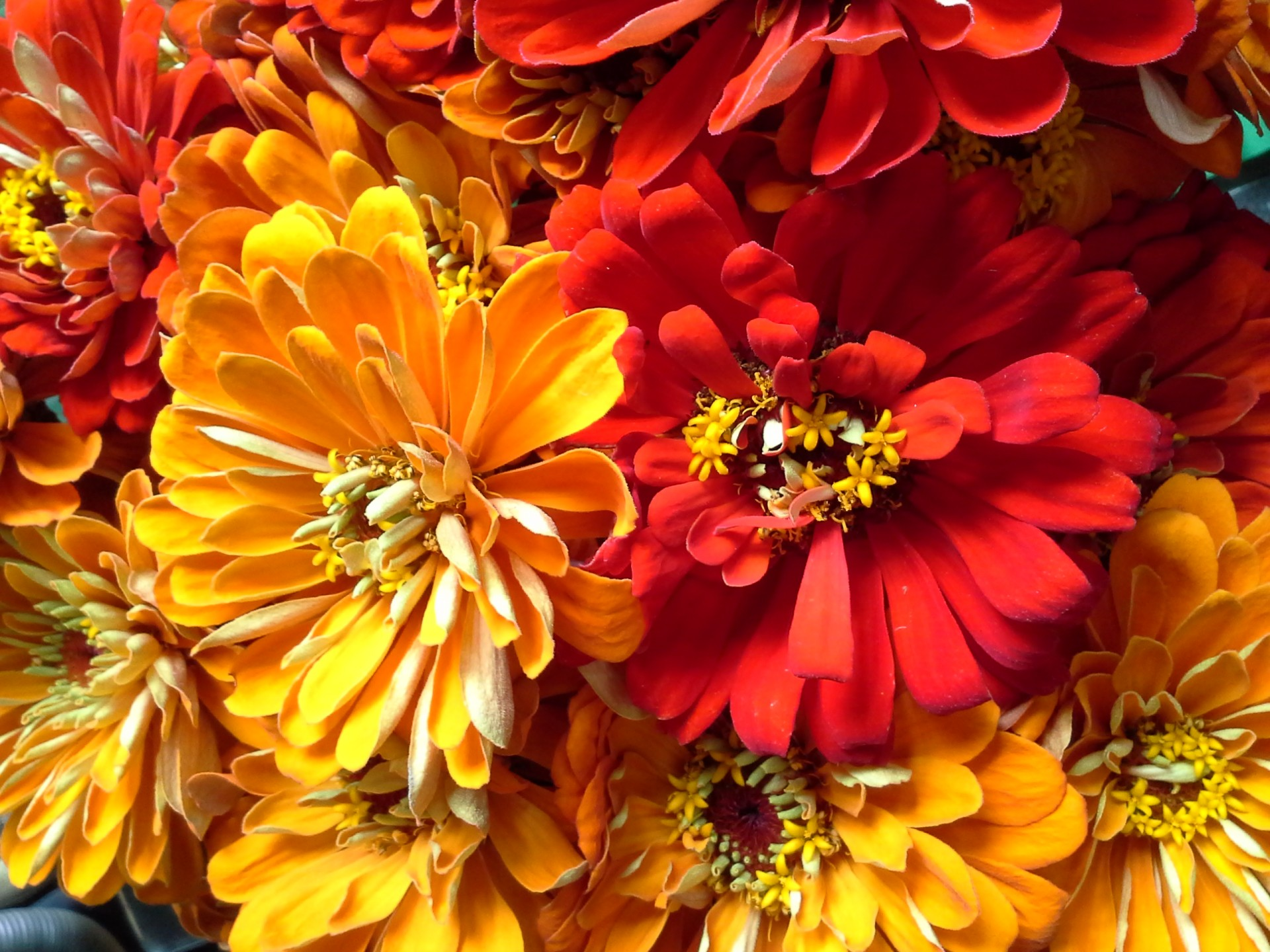 Flowers Background Summer Fall Orange Free Image From Needpix Com
