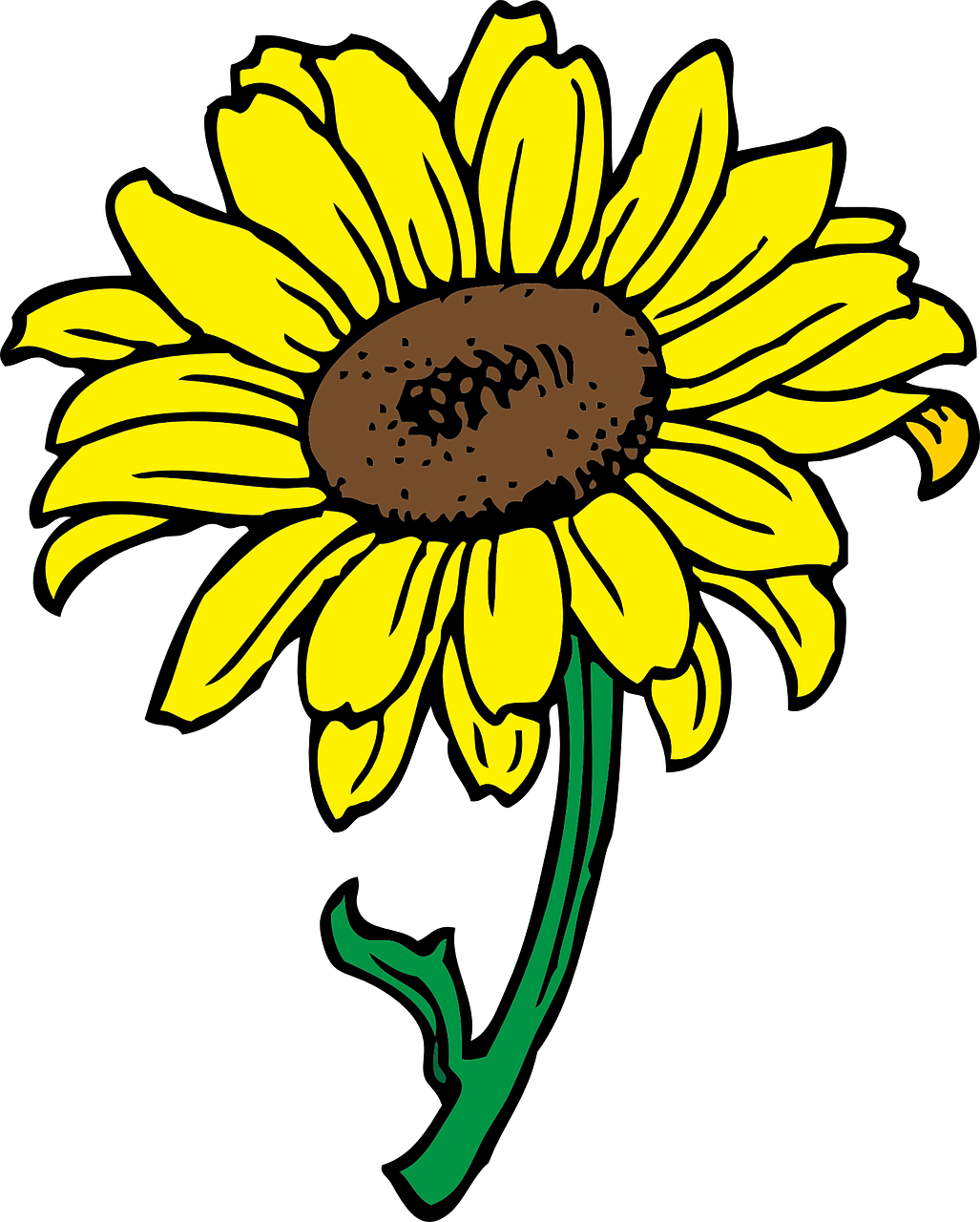 sun,flower,sunflower,yellow,blossom,free vector graphics,free pictures, free photos, free images, royalty free, free illustrations, public domain
