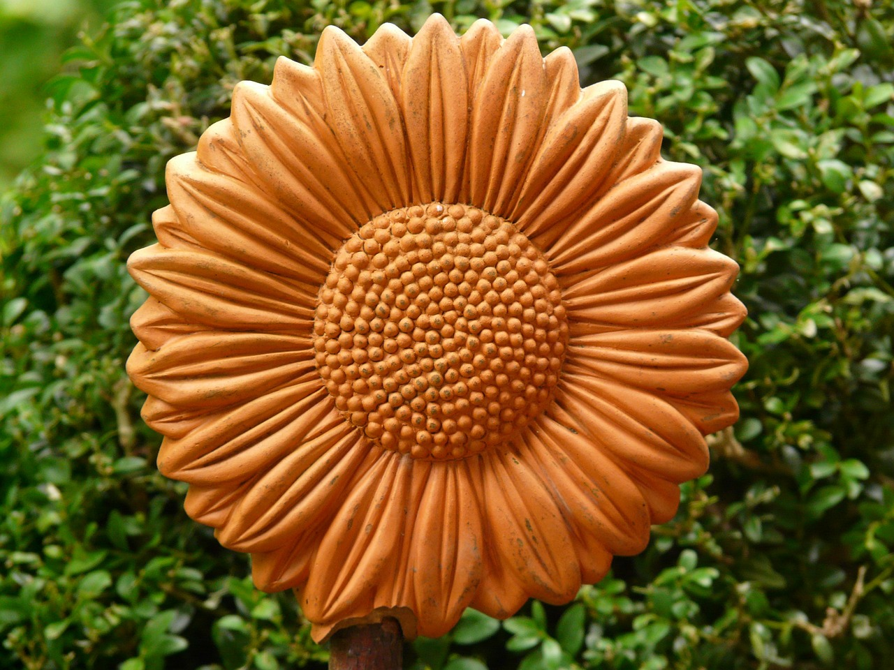 sun flower ceramic reddish free photo