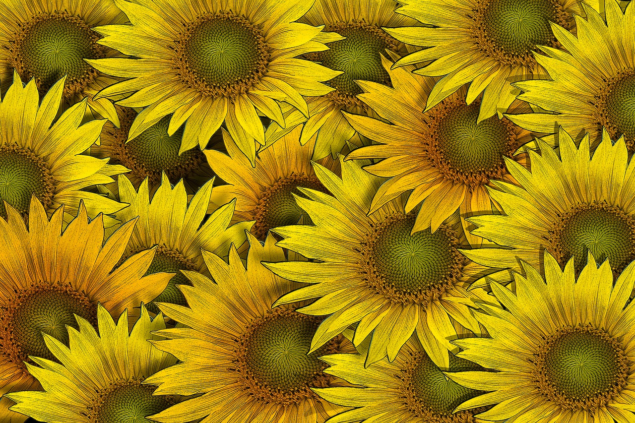 Sunflowerflowerflowersbackgrounddrawing Free Photo From