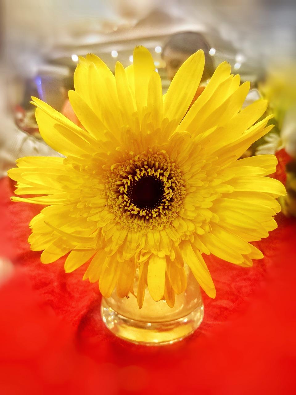 Sunflowerflowerpotyellow Free Photo From Needpix