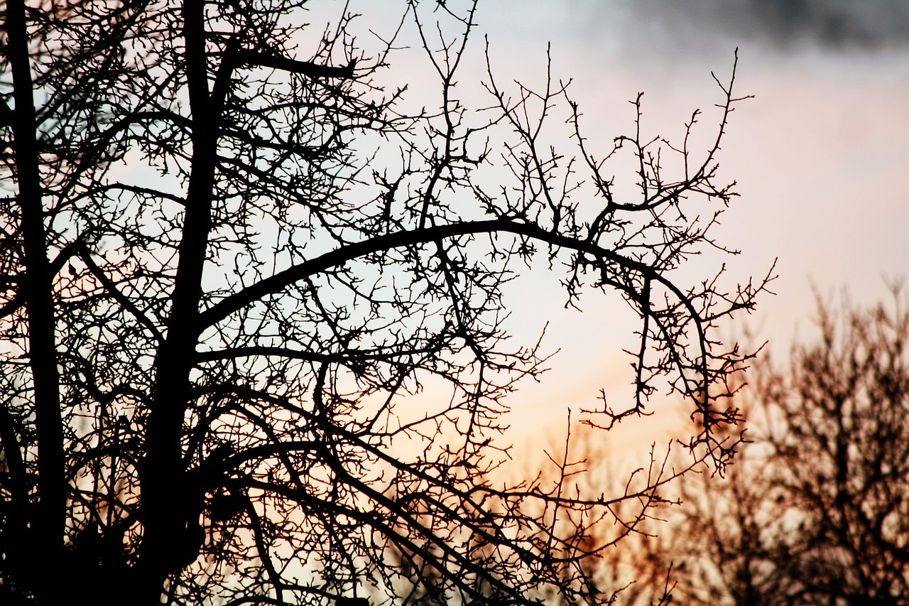 sunset tree branches free photo