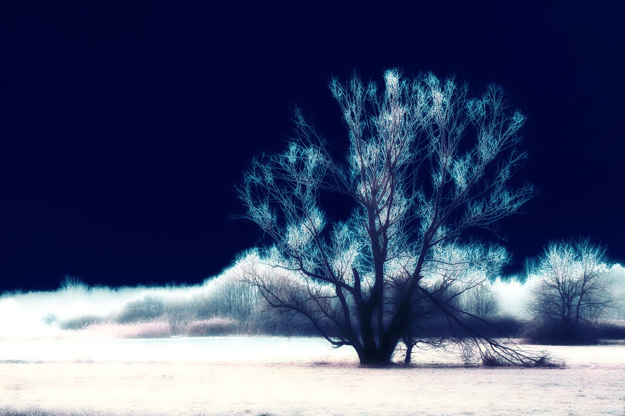 surreal tree landscape free photo