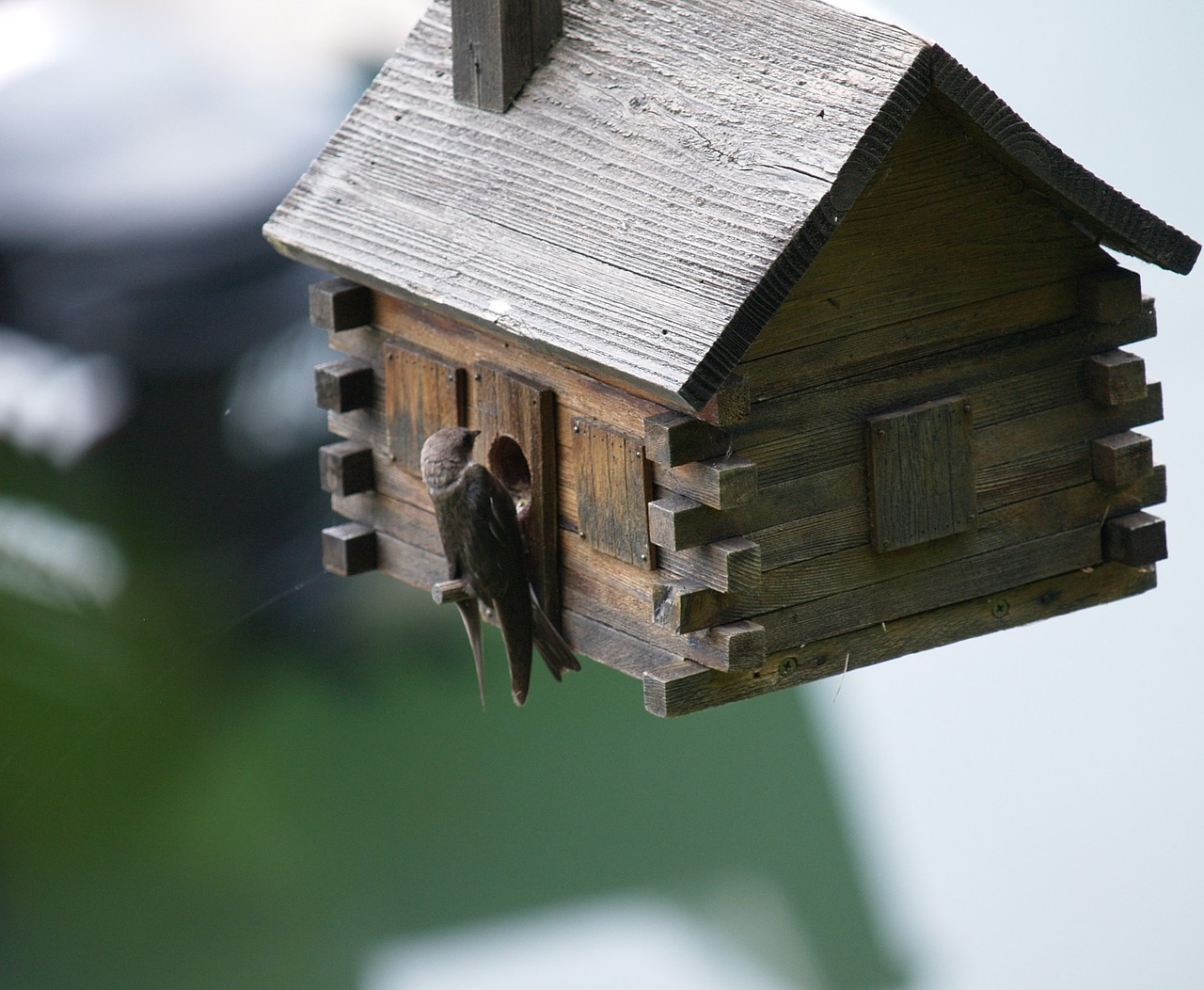 swallow birdhouse spring free photo