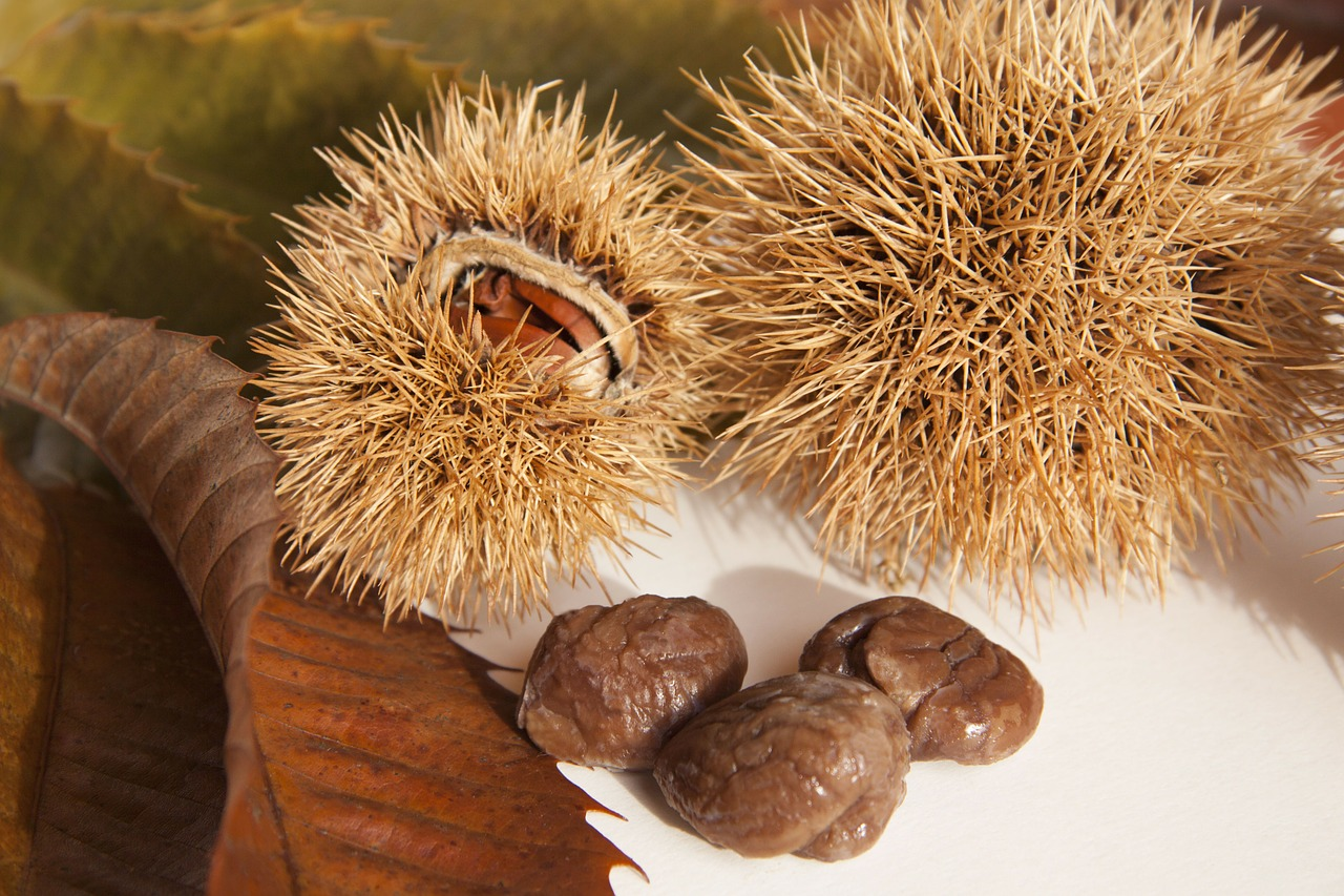 sweet chestnuts chestnuts nature free photo