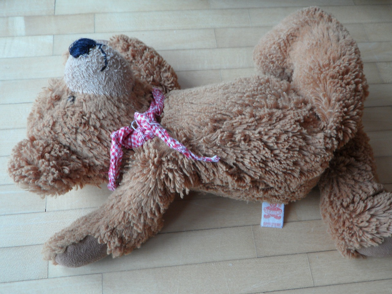 teddy careless thrown away free photo