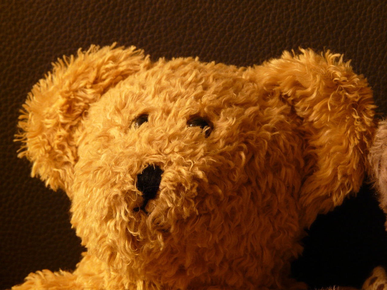 teddy bear soft fluffy free picture